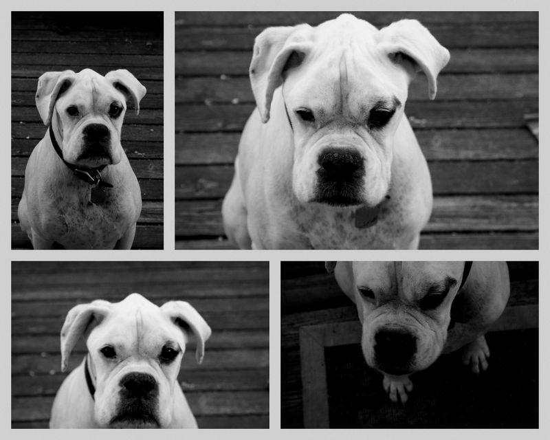 2010-07-06 Bad dog